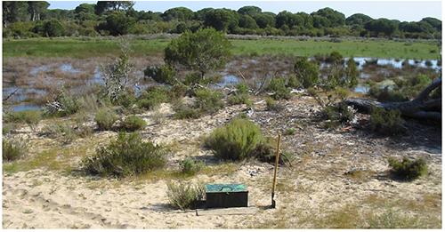 Ubicación de la boca del piezómetro Ref. SGOP49-S1 (casetilla verde) sobre el manto de dunas parabólicas (MDSE) con la laguna de Charco Del Toro al fondo
